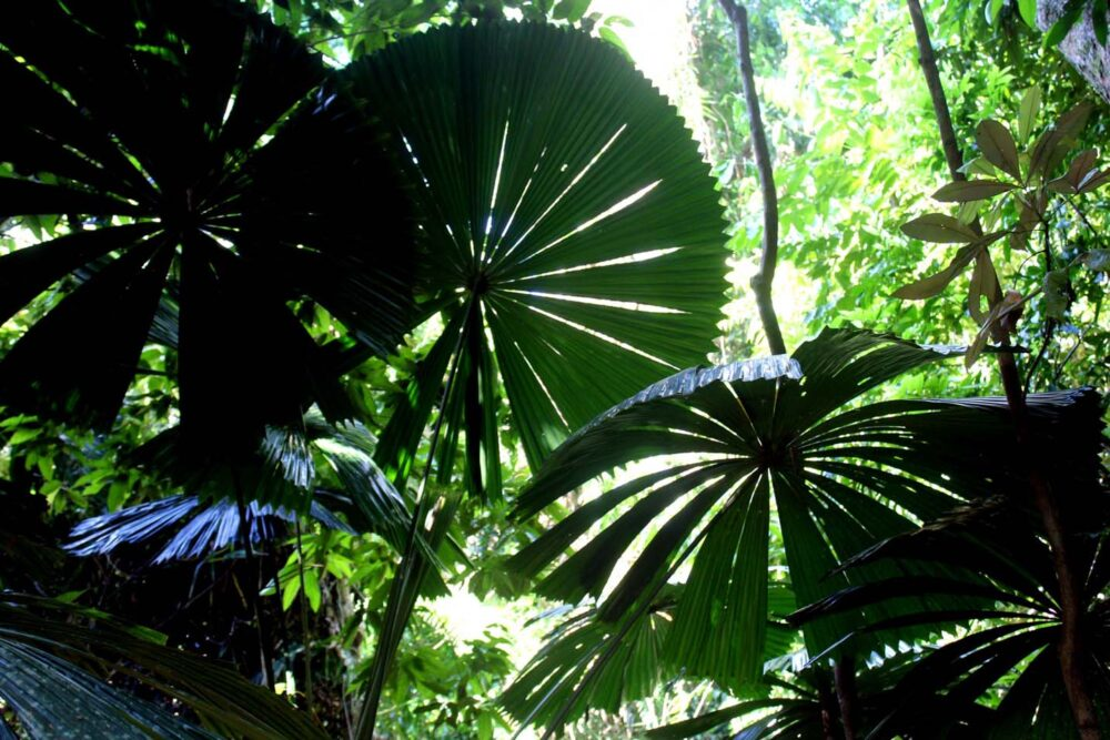 rainforest plants cape trib beach house