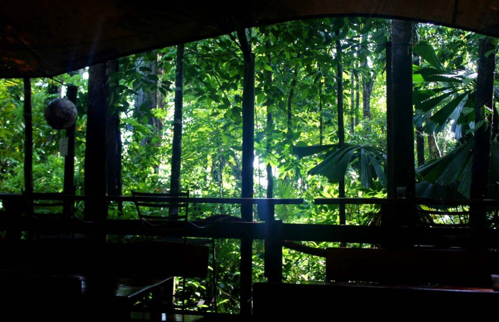 rainforest views cape trib beach house