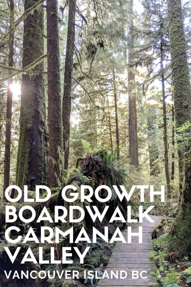 The Carmanah Valley is home to a cathedral of trees, a collection of the biggest and best accessible huge trees on Vancouver Island, British Columbia. This is one of those truly special places in the world. Here's everything you need to know about Carmanah Walbran Provincial Park, Canada. offtracktravel.ca