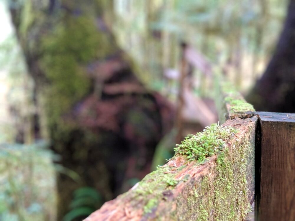 Close up of boardwalk fence with moss