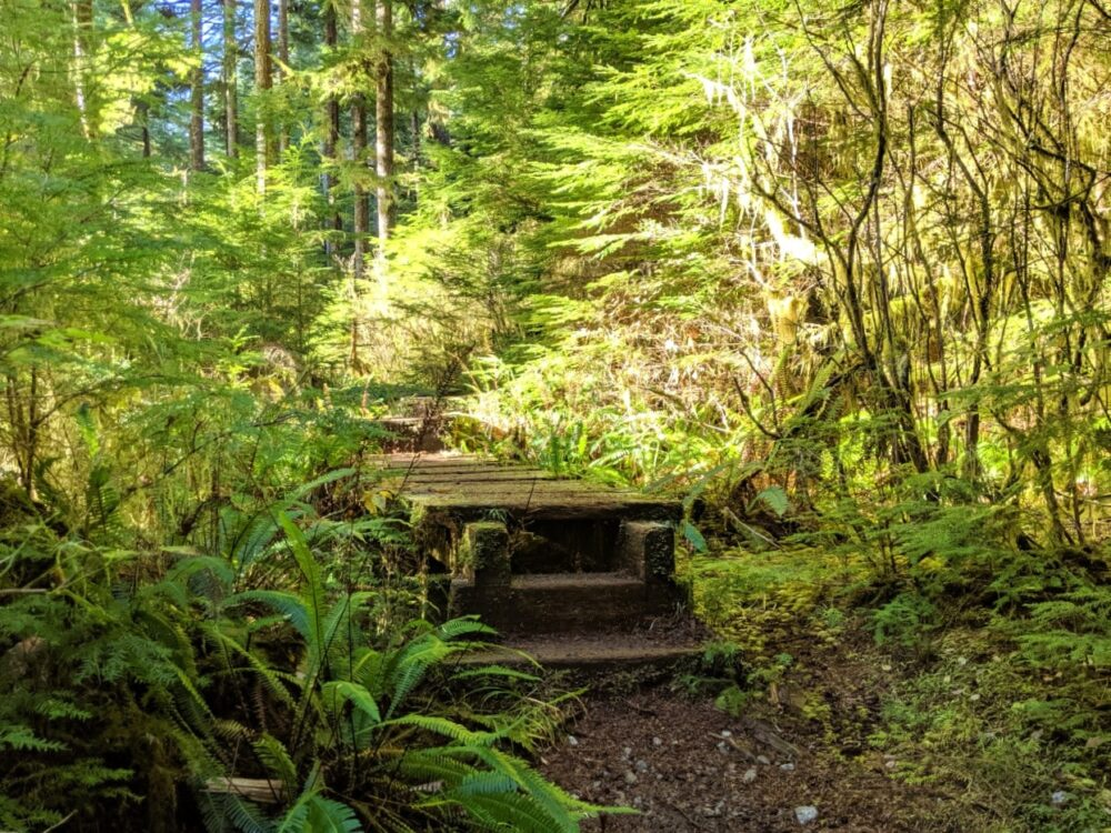 A mossy boardwalk surrounded by fern, lit by sunshine