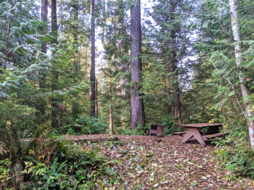 A picnic table, fire pit and tent pad set into the forest, covered in fallen leaves