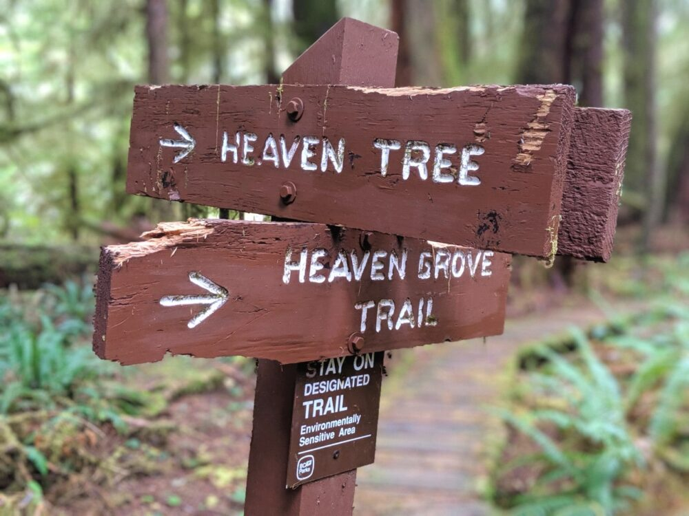 Wooden signs to Heaven Tree and Heaven Grove Trail