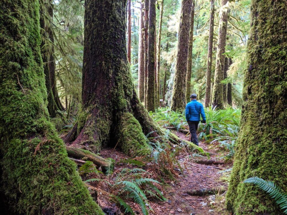 JR walking on dirt path between large tree in Carmanah Walbran Provincial Park