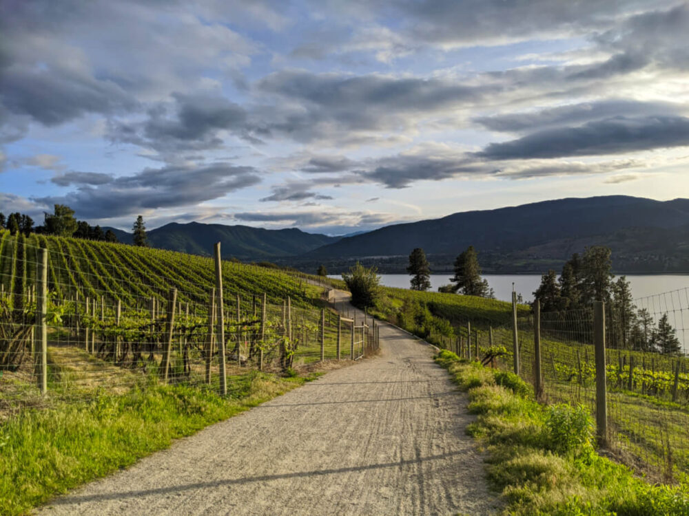 Gravel pathway leading away from camera, lined with vineyards, lake views in background
