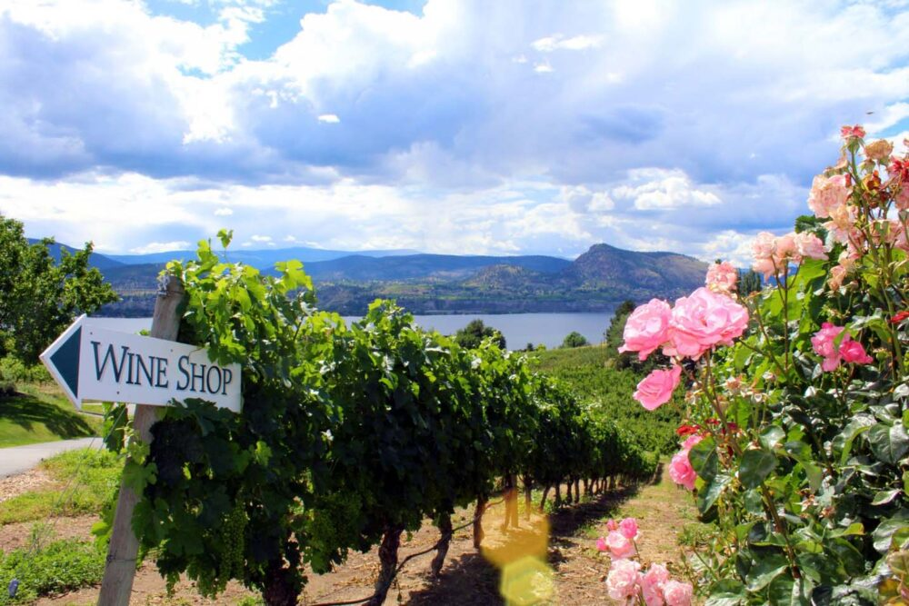 Vineyards leading down to Okanagan Lake with 'wine shop' sign