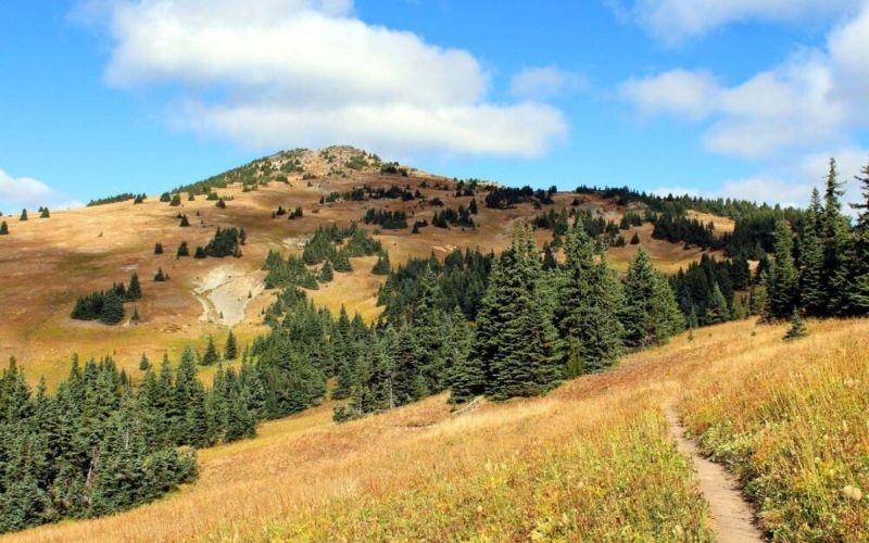 Thru-Hiking the Heather Trail, E.C. Manning Provincial Park, BC