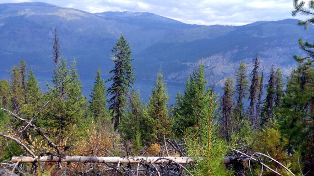 Trees in foreground with valley and Slocan Lake in background, Valhalla