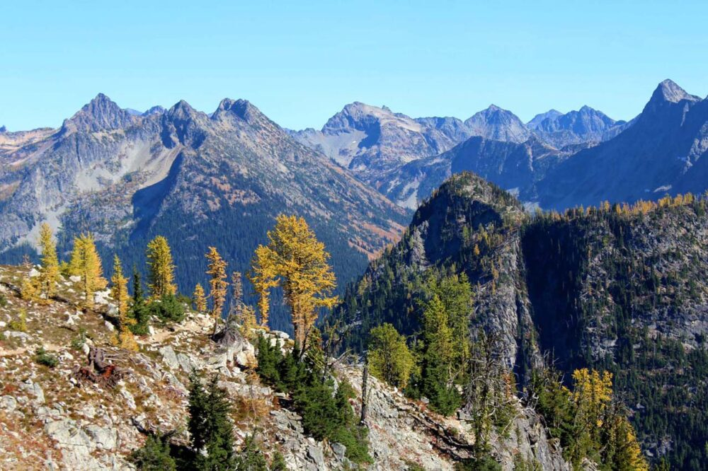 Hiking the Heather-Maple Pass Loop Trail, Washington, USA - larch trees