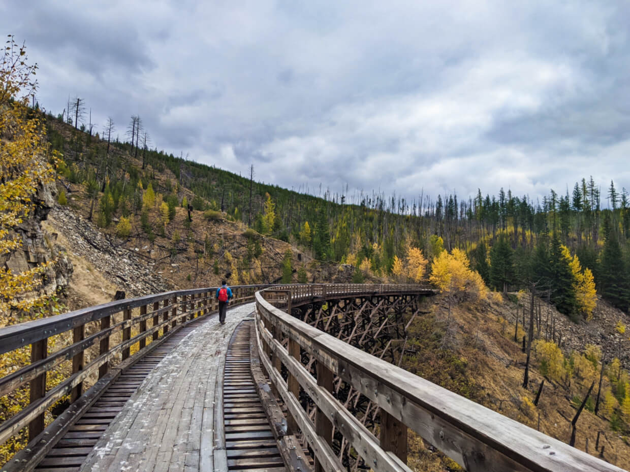 Side view of large wood railway trestle at Myra Canyon, surrounded by mixture of green and golden (larch) trees