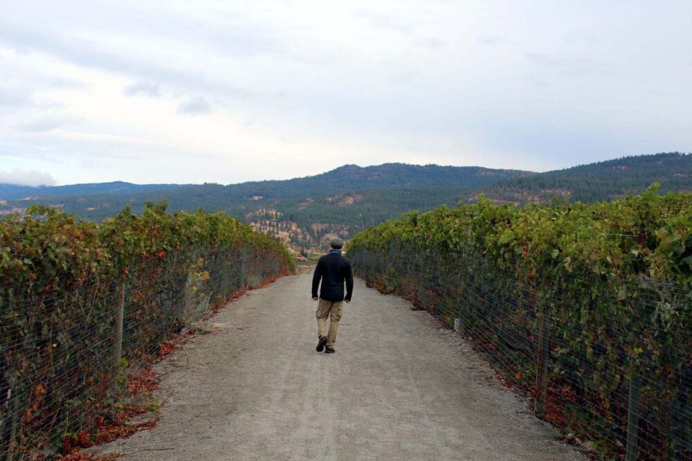 jr walking the kvr trail penticton vineyards