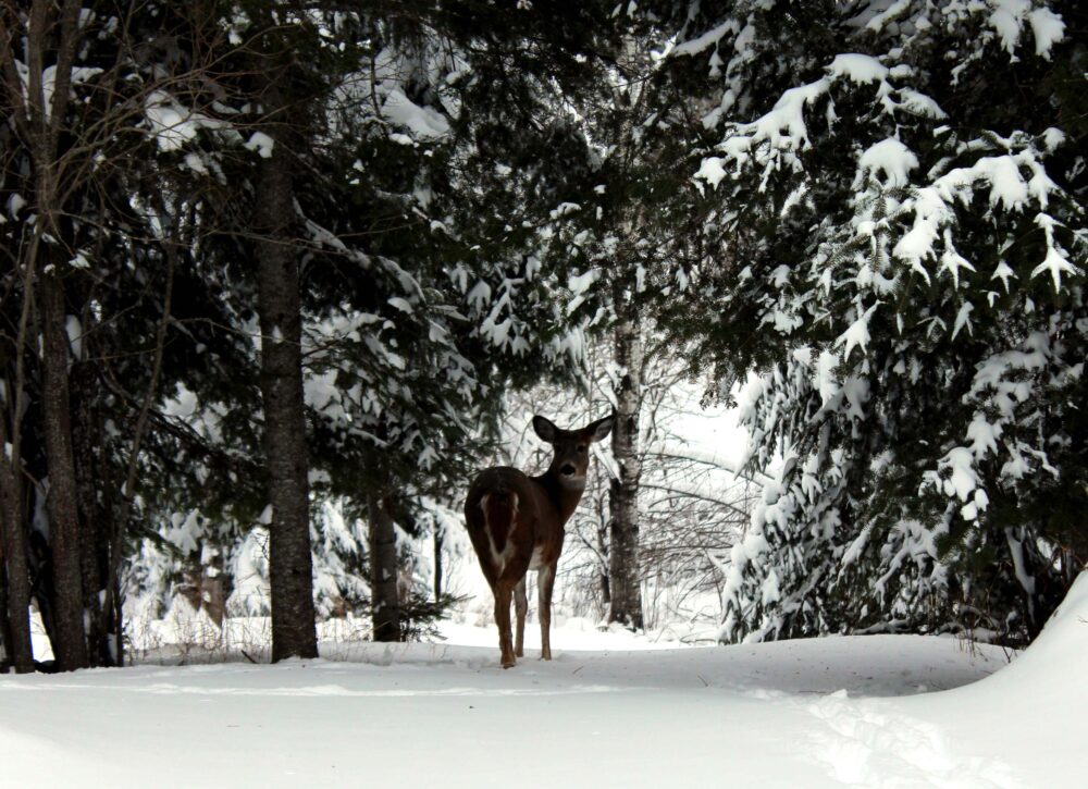 65 Things to do in Canada in winter - backyard view in Kenora, Ontario