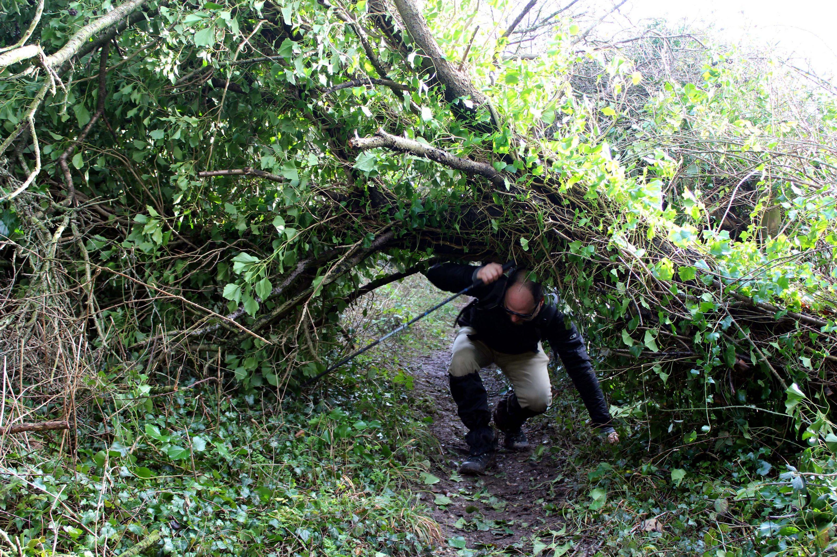 Great Stones Way long distance walking path - tree hazards