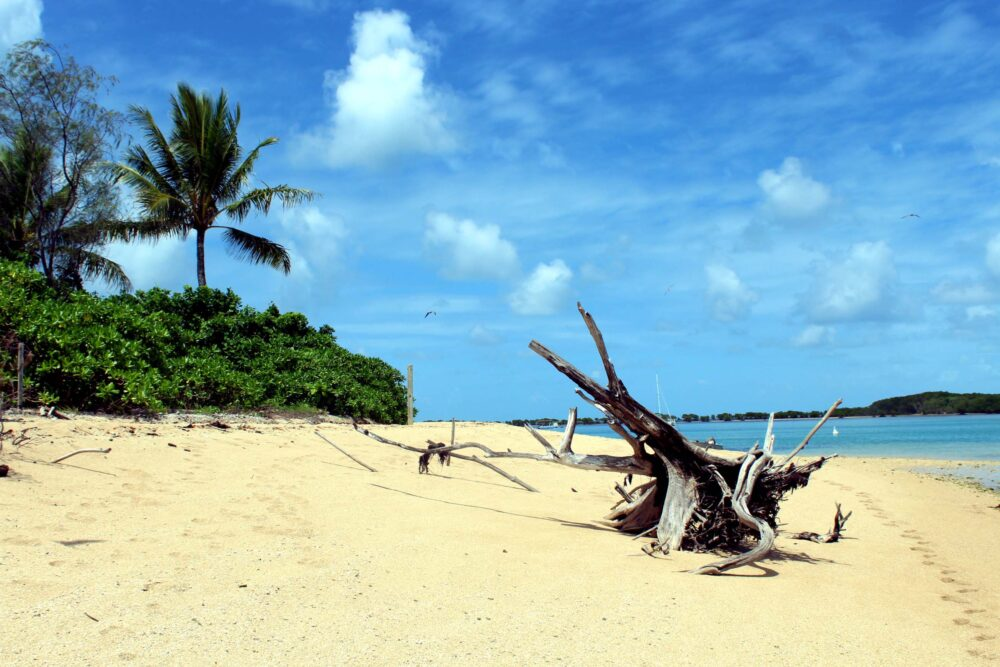 White sand beach with palm trees and driftwood - Lowe Island is a beautiful place to visit during Far North Queensland's wet season