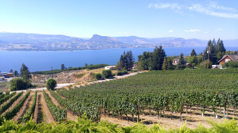 Vineyards sloping towards Okanagan Lake, Naramata Bench