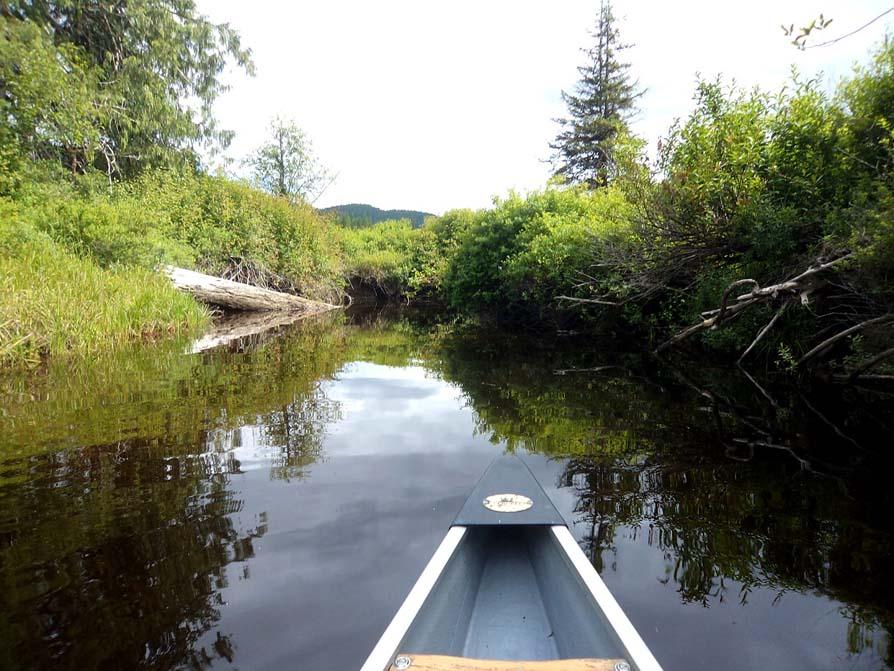 Paddling to Brewster Lake, Sayward Forest Canoe Circuit