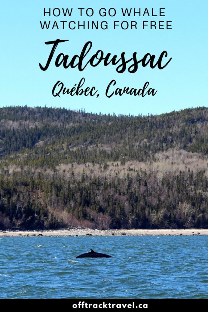 Click here to learn how you can go whale watching for FREE in Tadoussac, Quebec, Canada! offtracktravel.ca
