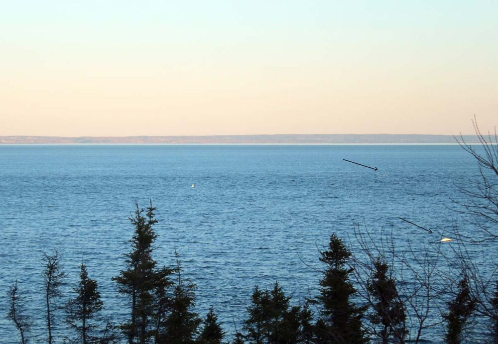 Belugas seen from shore at Mer et Monde, an example of whale watching in Tadoussac