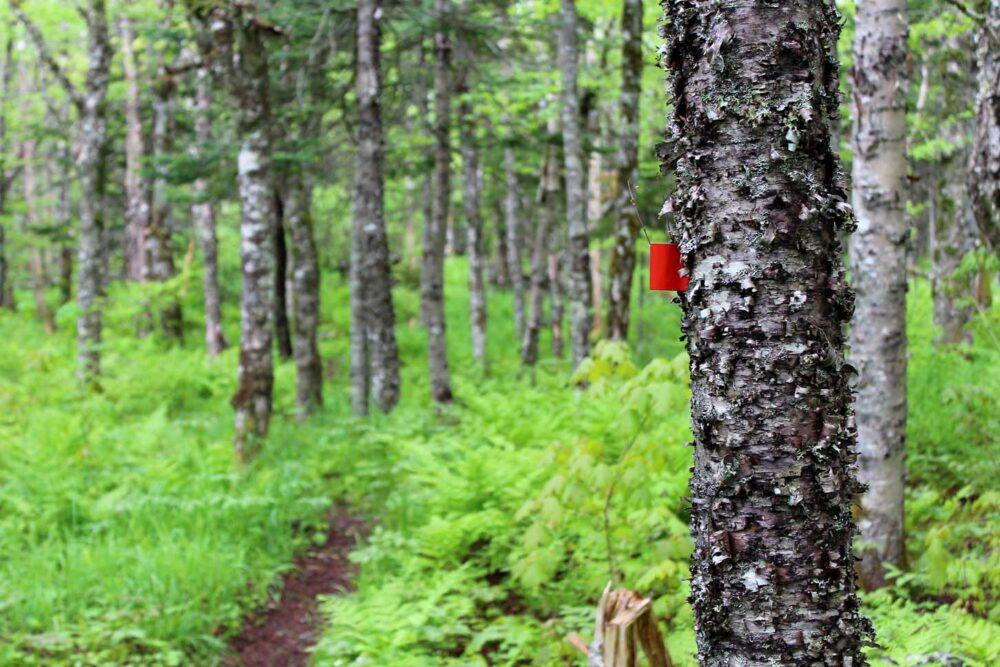 cape chignecto trail markers forest