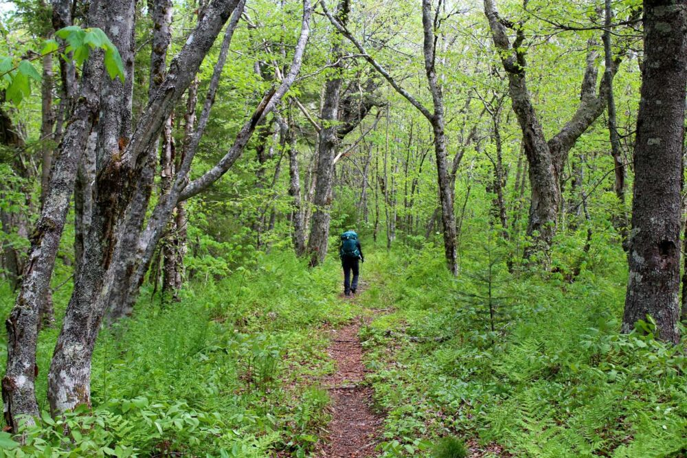 forest hiking cape chignecto trail