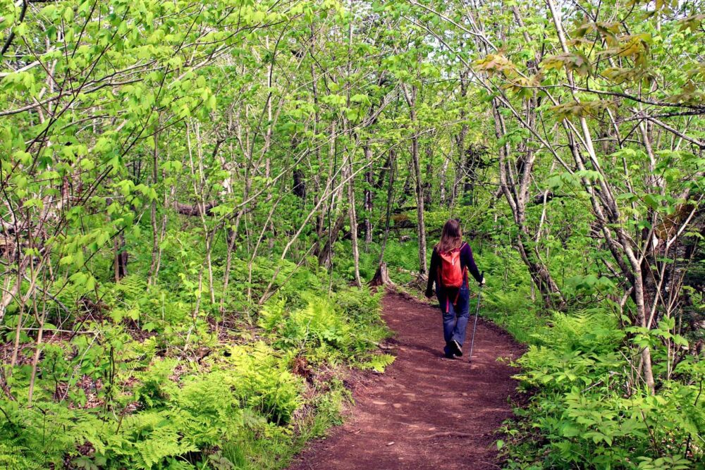 Gemma walking through Cape Split forest