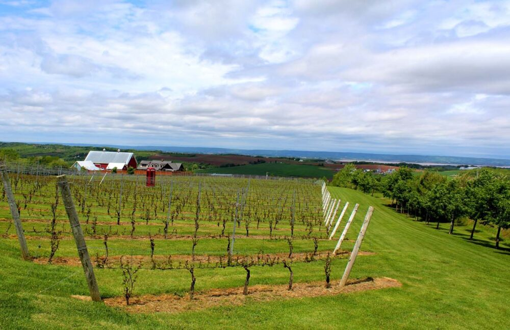 luckett winery magic wine bus tour wolfville
