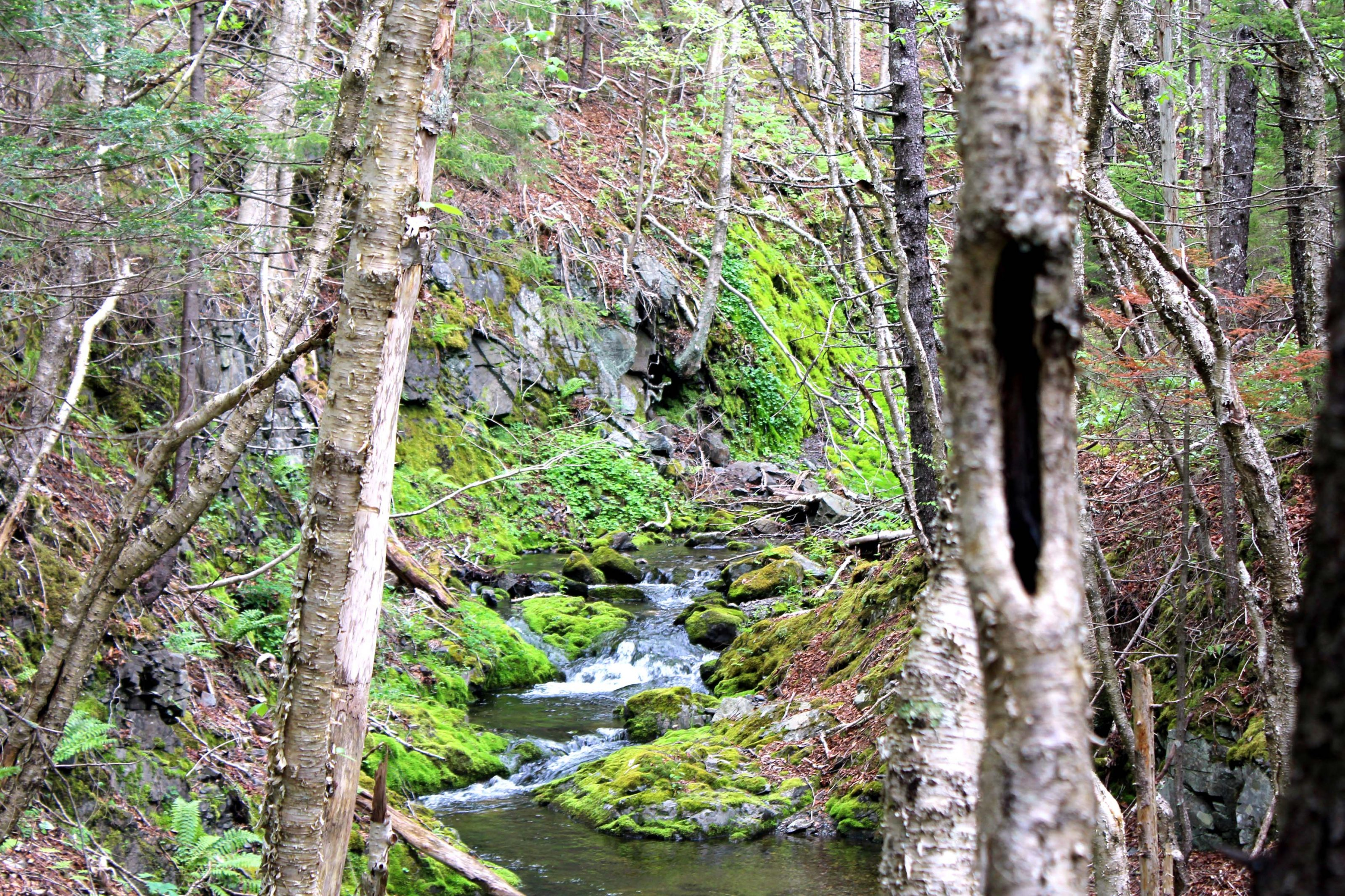 Small stream cascading in forest on the Cape Chignecto Coastal Trail