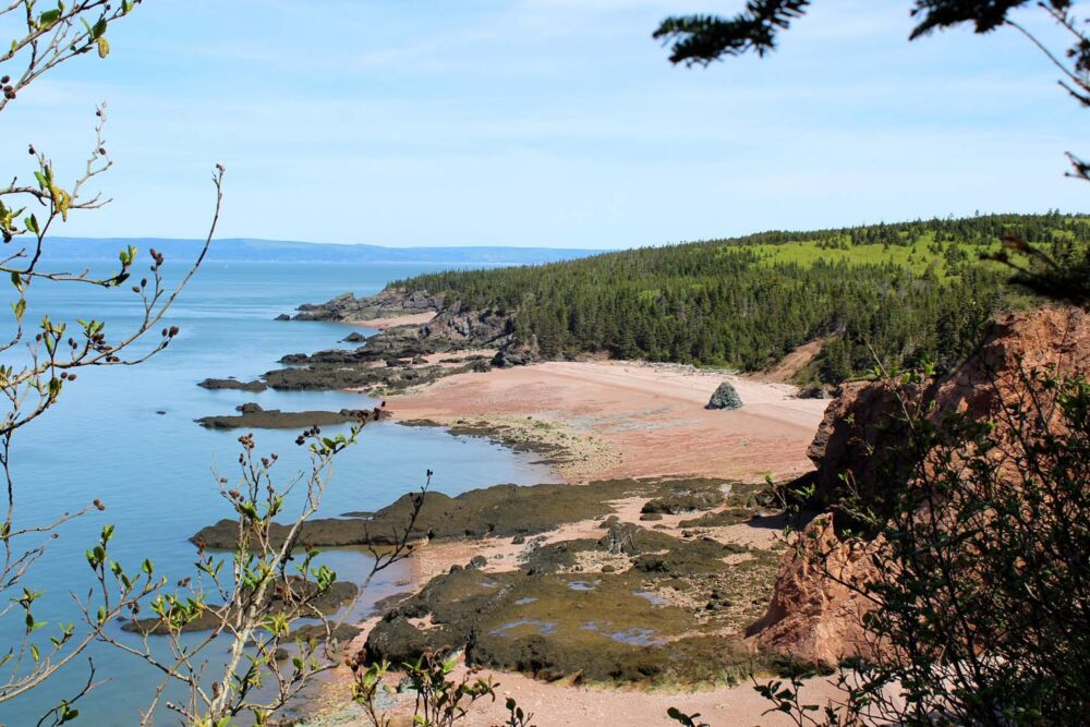 View through trees at pink hued sandy beaches on the Cape Chignecto Coastal Trail