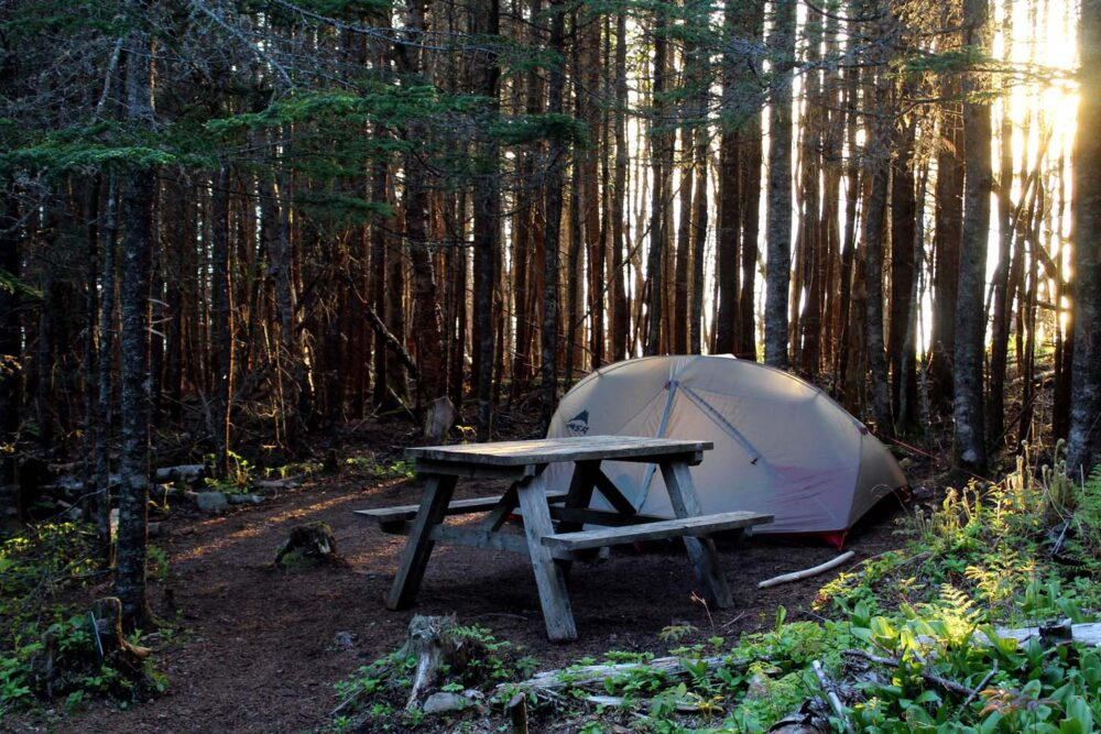 Seal Cove campsite with set up tent and picnic table surrounded by small trees