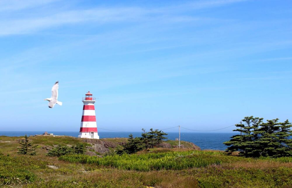 Red and white striped lighthouse on Brier Island, with seagull flying in front