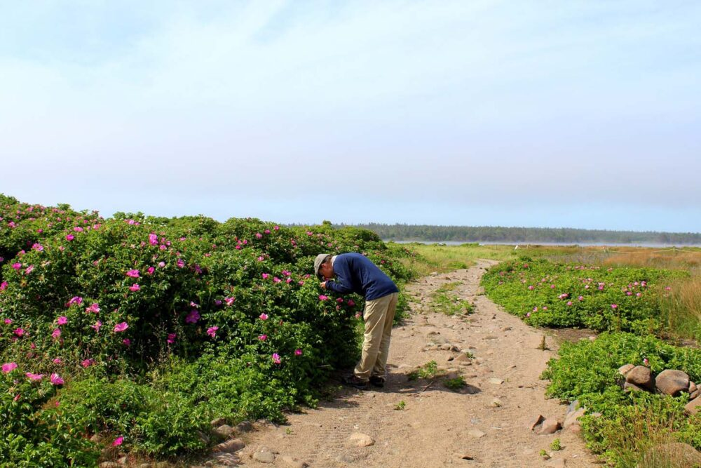 JR stopping to smell the flowers at Pond Cove, Brier Island, Nova Scotia