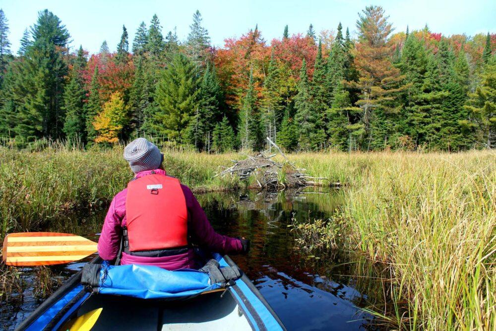 algonquin provincial park beaver dam