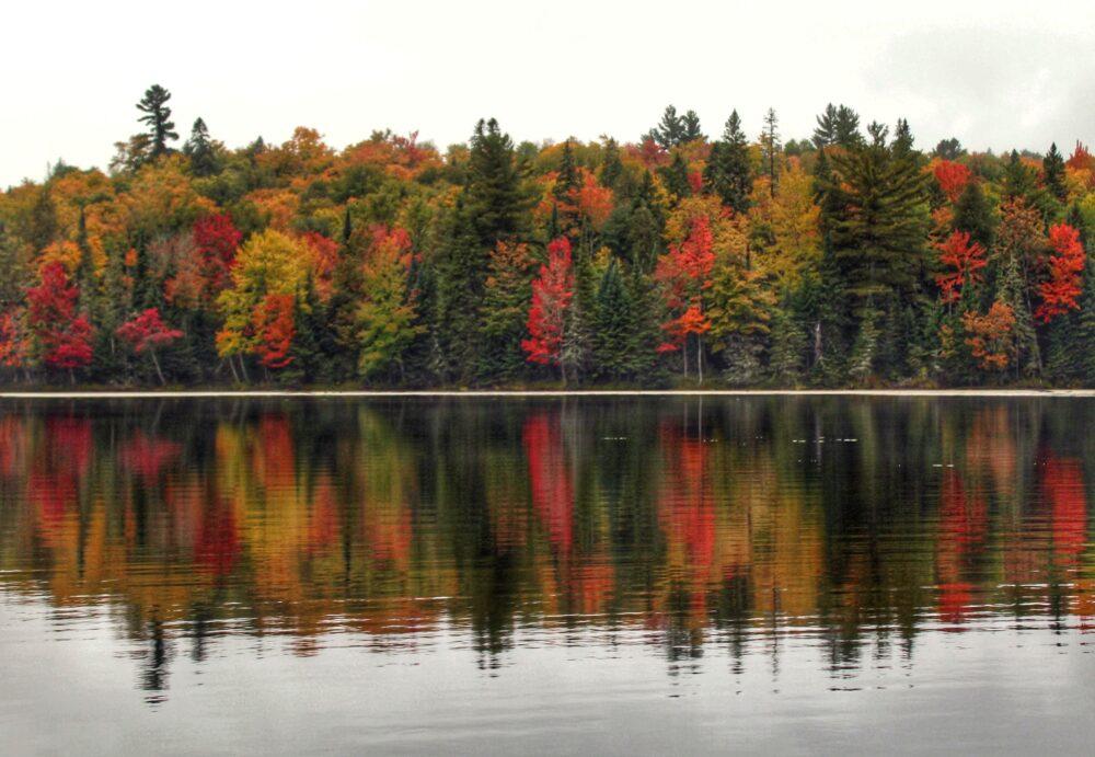 fall colours algonquin provincial park ontario