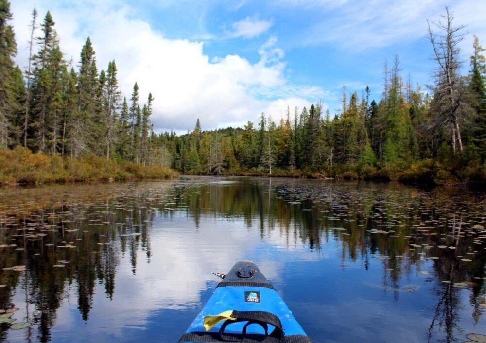 lilypads algonquin provincial park canoeing
