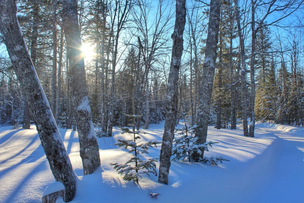 Snowy forest in New Brunswick