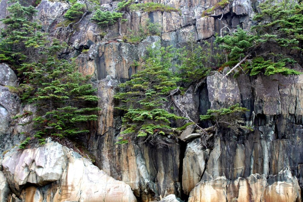 Green plants growing on rock cliffs, 100 Wild Islands