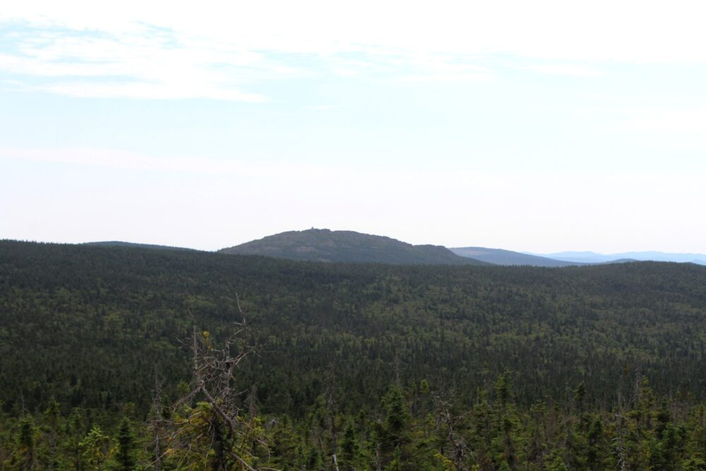 Acadian forest and rounded mountain summit in background