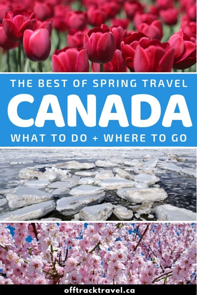 Spring travel in Canada is quieter, more affordable and somehow more rewarding. Most visitors to Canada arrive in the months of July and August so March to June is considered a 'shoulder' season. In this comprehensive guide, discover the highlights of visiting Canada in spring as well as top travel destinations and spring travel advice! offtracktravel.ca