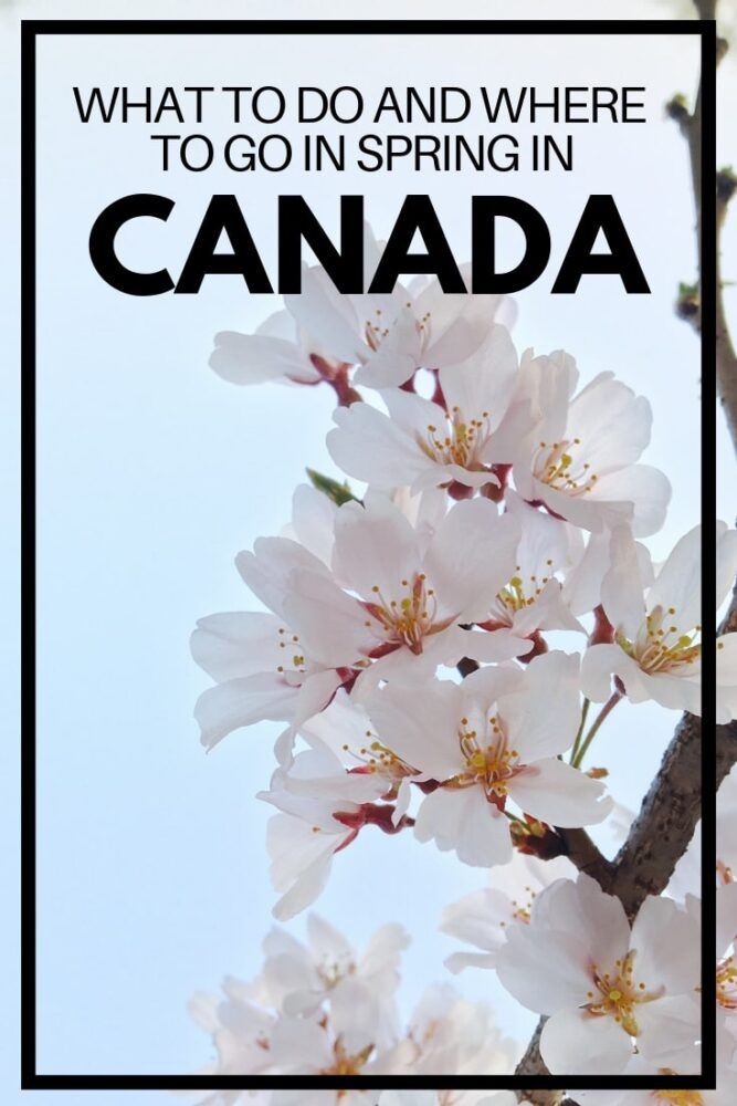 The arrival of the spring equinox around 21st March signifies the official arrival of spring in Canada. The reality can sometimes feel a little different in the Great White North but nonetheless, spring is a great time of year to travel Canada. Spring travel in Canada is quieter, more affordable and somehow more rewarding. In this comprehensive guide, discover the highlights of visiting Canada in spring as well as top travel destinations and spring travel advice. offtracktravel.ca