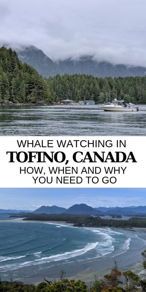 If you're looking for a unique activity for your Vancouver Island holiday or have already decided to go whale watching in Tofino, click here for all of the essential information you need! offtracktravel.ca