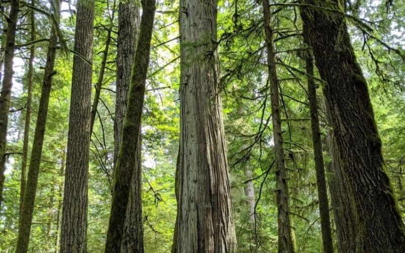Ultimate Guide to Cathedral Grove (MacMillan Provincial Park), BC
