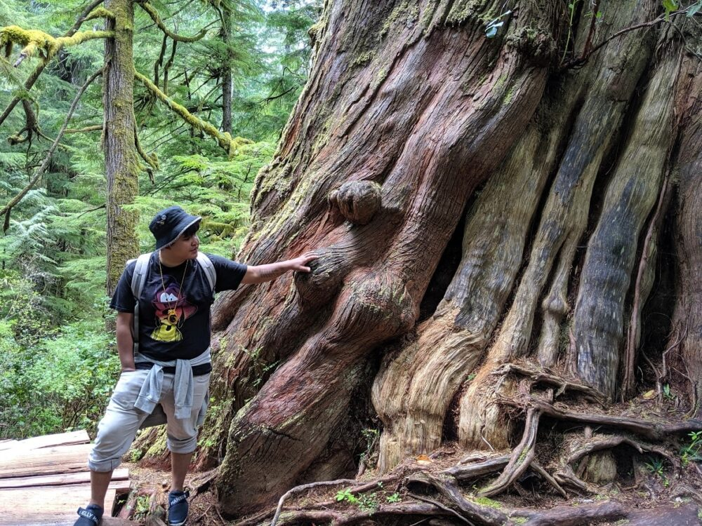 Man standing next to gigantic red cedar tree, with arm outstretched on trunk