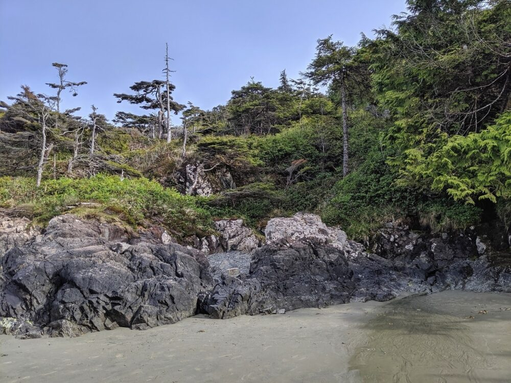 Rocks on sandy beach, backdropped by coastal pine trees