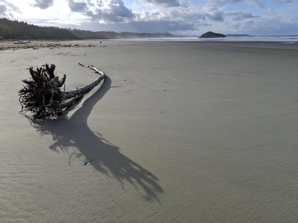 Piece of driftwood on sandy beach with calm ocean behind
