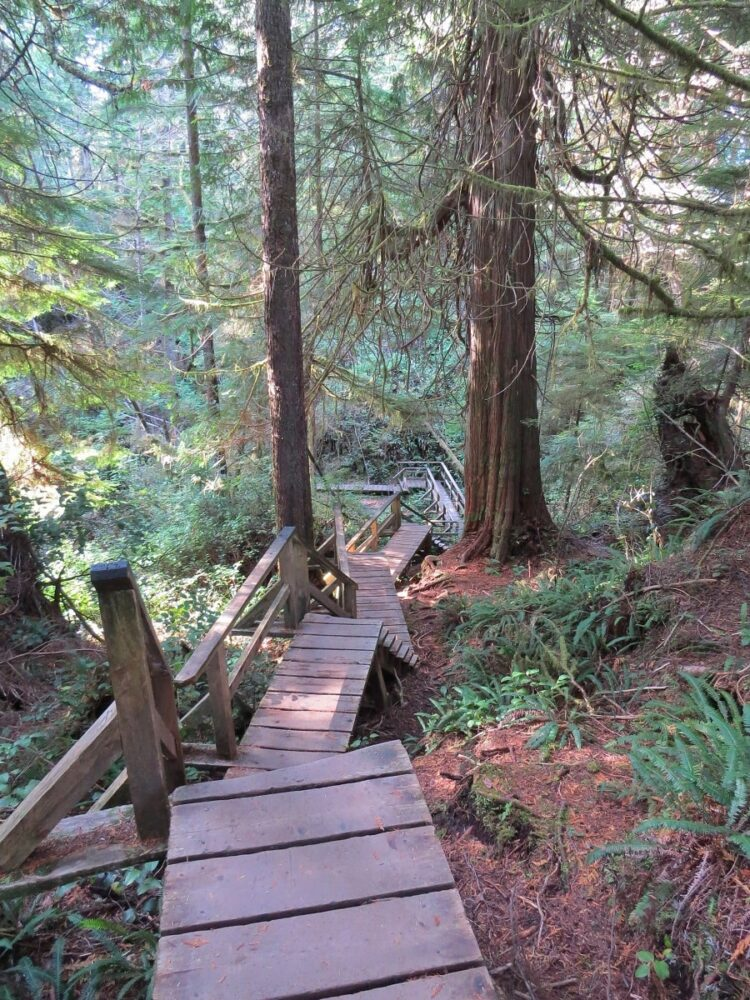 Boardwalk staircase leading down into rainforest on the Schooner Cove trail