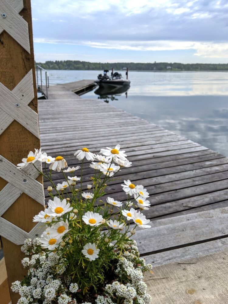 Yellow and white wildflowers in front of dock, with fishing boat moored behind