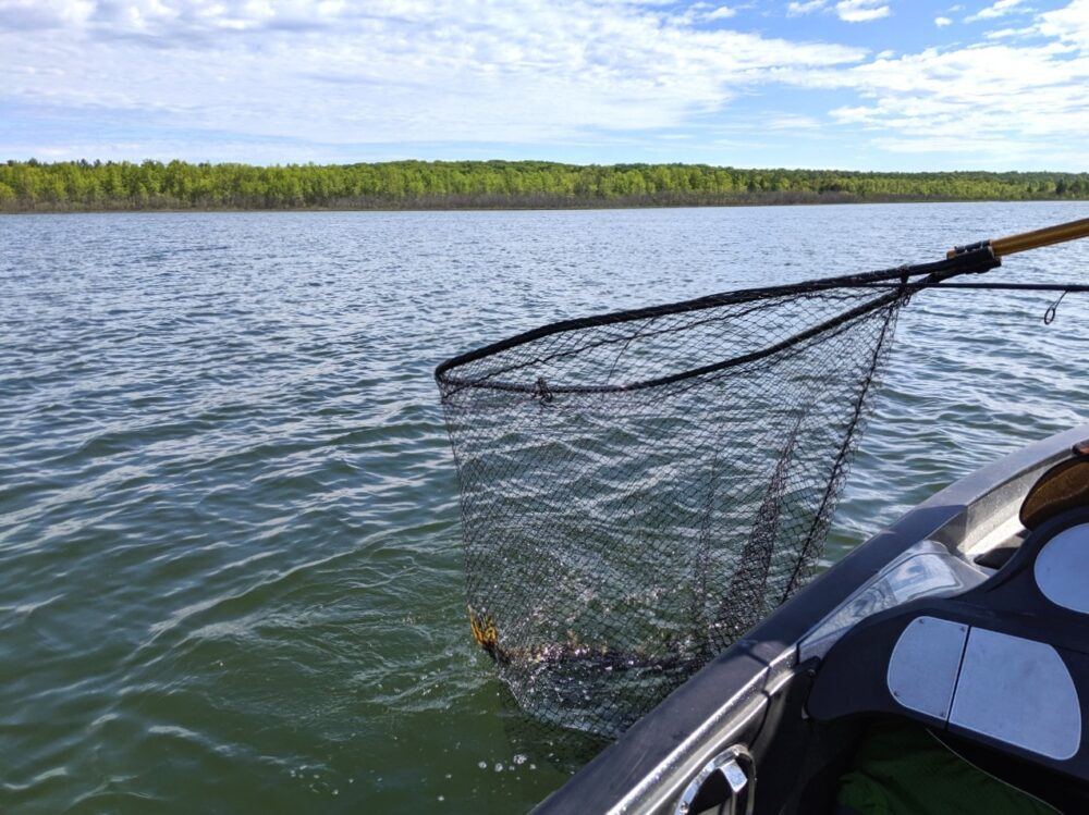 Catching a northern pike in a net while fishing on Lake Huron