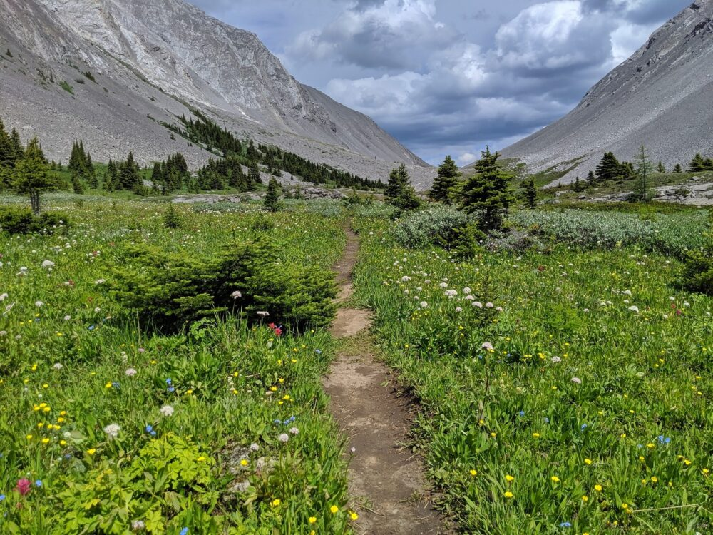 A dirt path through an alpine meadow with surrounding mouuntains - Rummel Pass