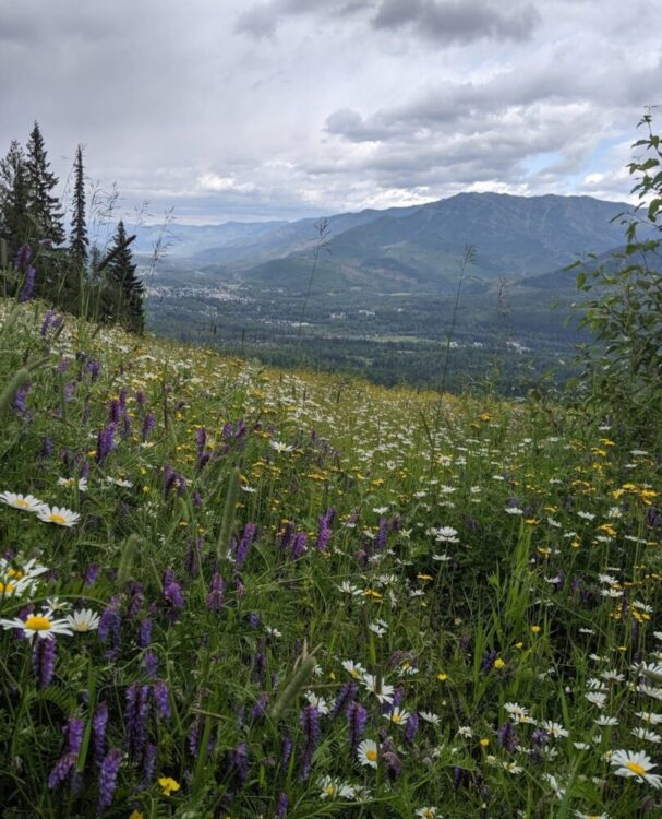 Close up of wildflowers with views of mountain peaks behind