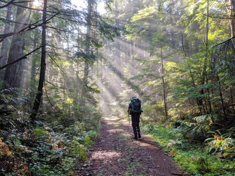 JR hikes away from the camera in a forest, with sunlight streaming through the trees